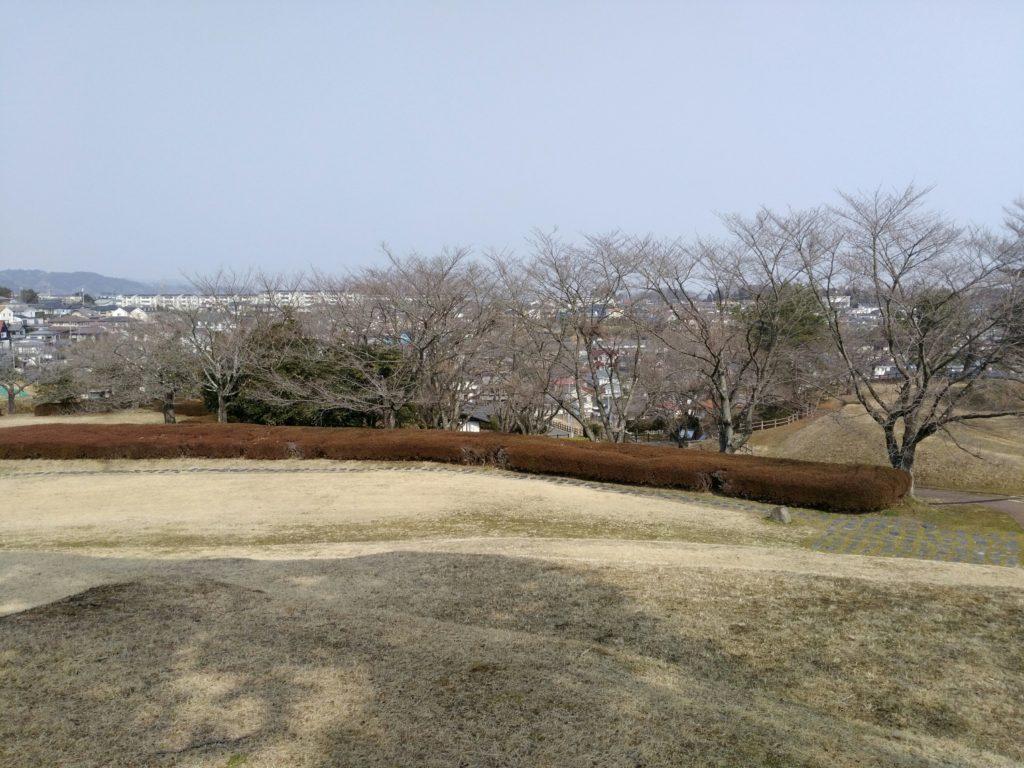 雷神山古墳 桜