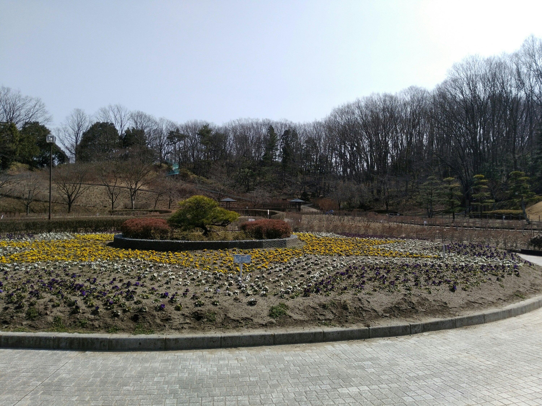 亘理公園 花畑