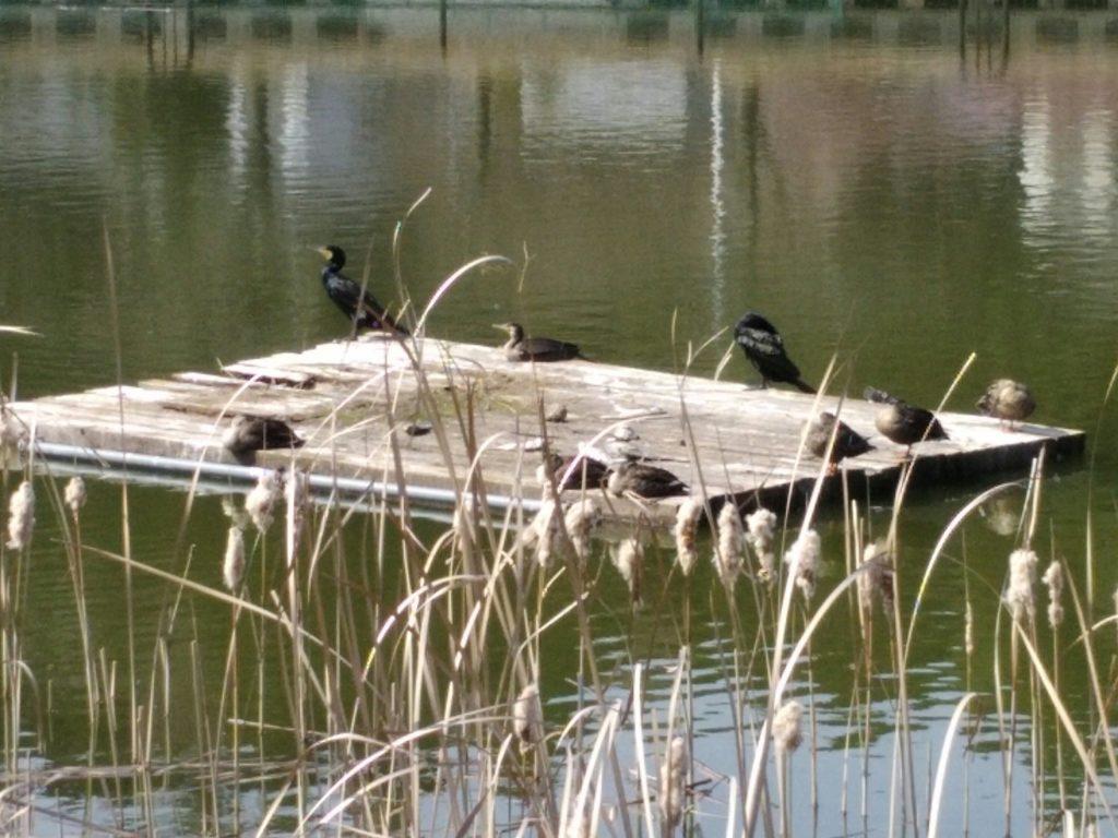 亘理公園 野鳥