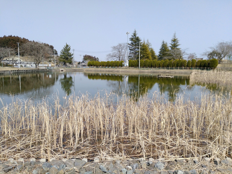 亘理公園 修景池