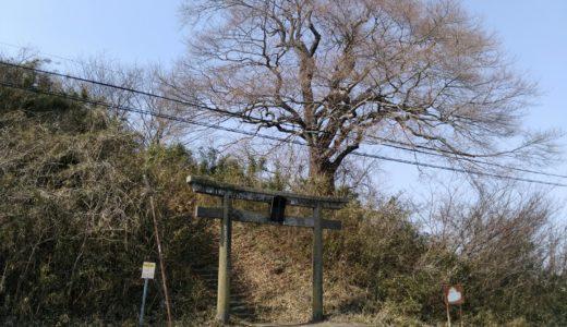 尊久老稲荷神社|亘理町のディープスポット「種まき桜」を見て来ました