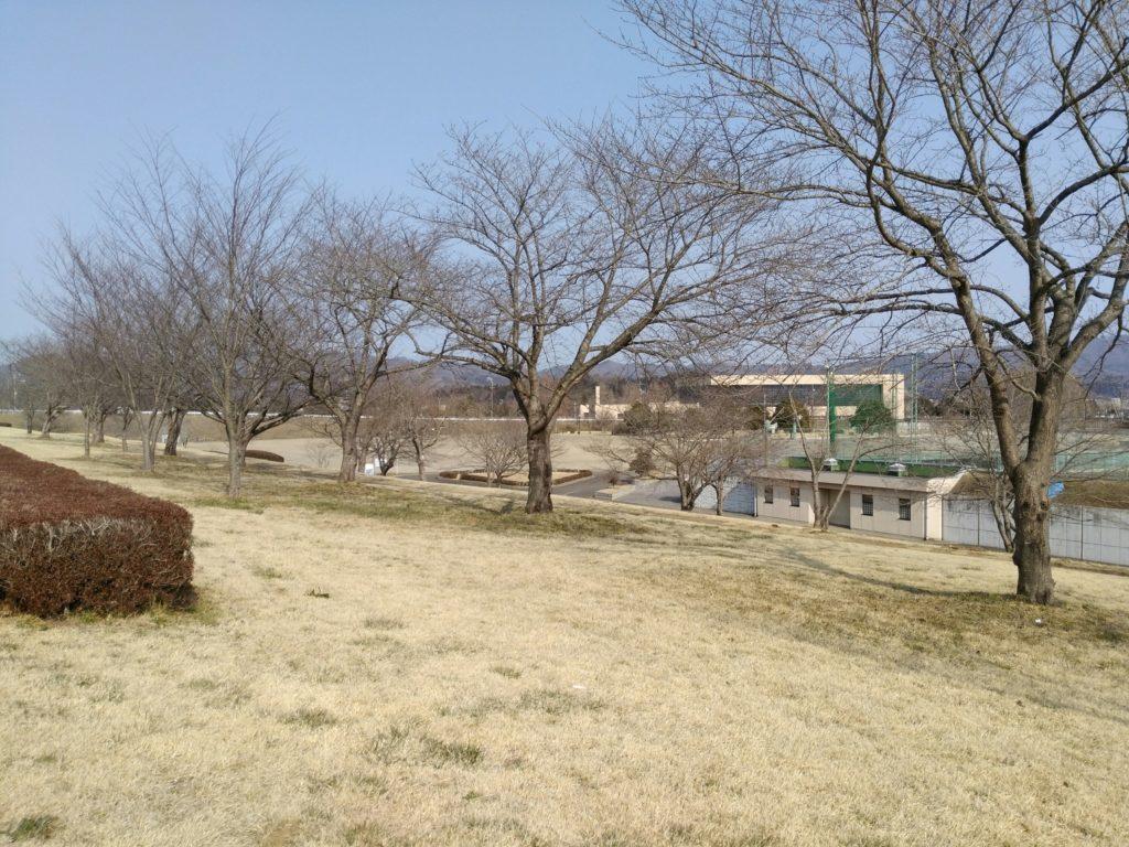 角田中央公園 花見スポット
