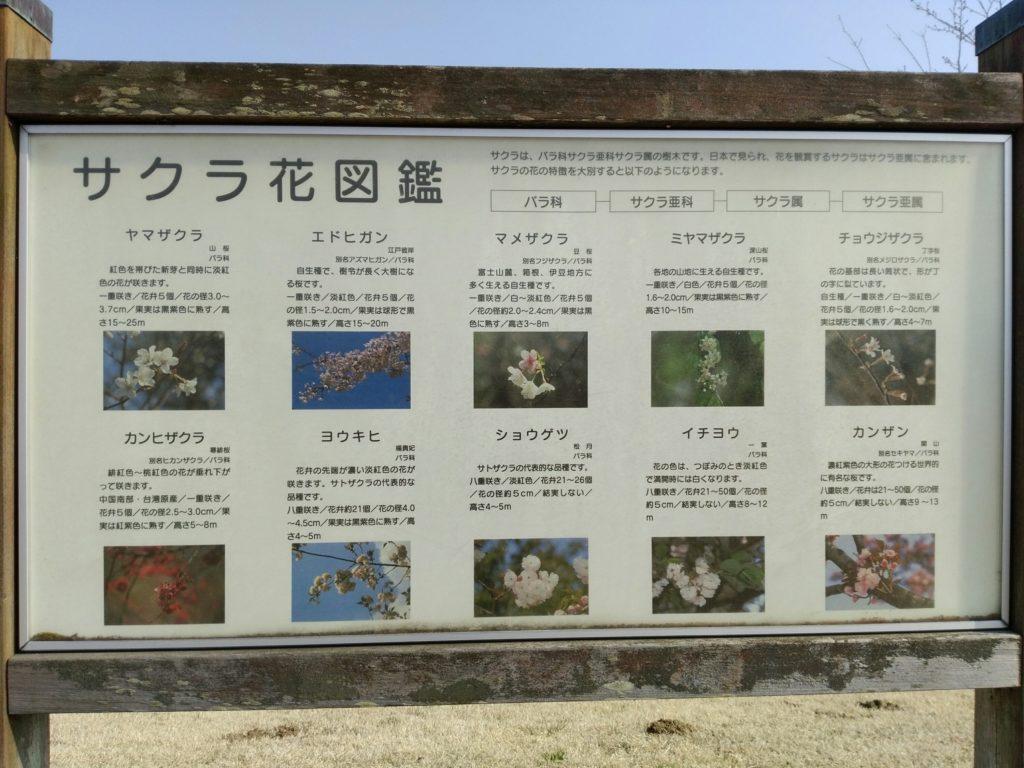 角田中央公園 サクラ花図鑑