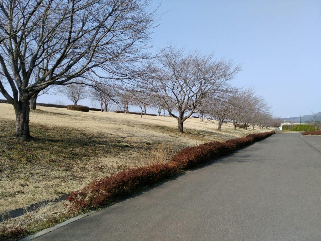 角田中央公園 桜並木