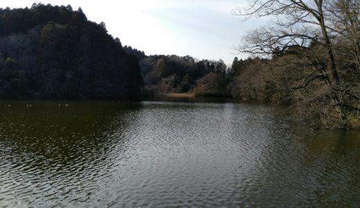【角田市】手代木沼 観光レポ|桜や白鳥発見!今はハスは咲かないみたい。
