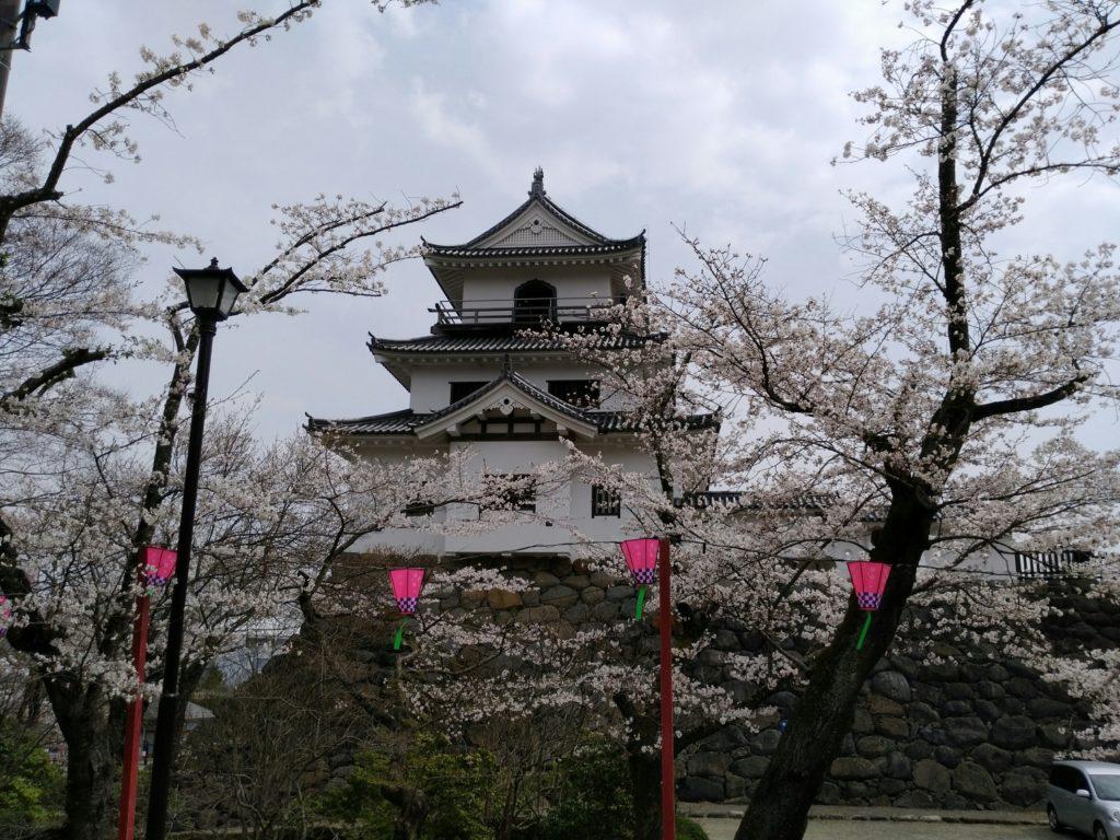 白石城 道中の桜