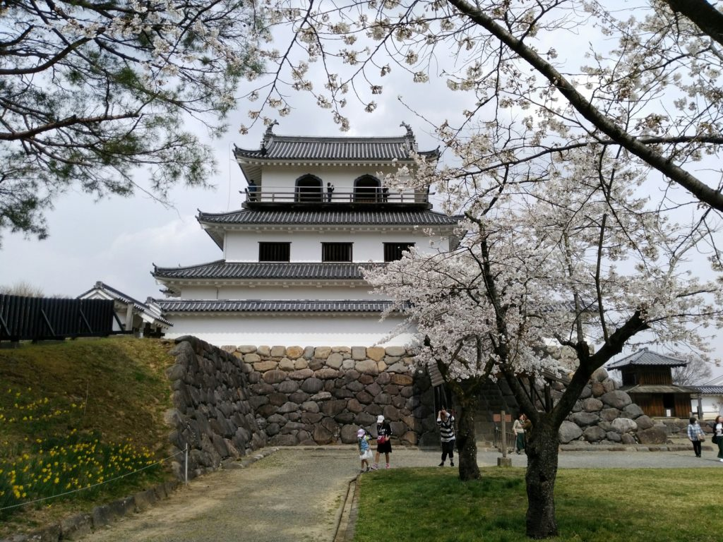 白石城 城下の桜