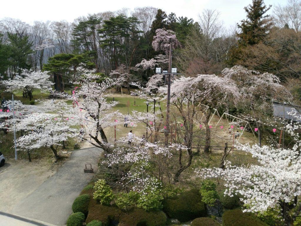 白石城 天守閣から益岡公園の桜