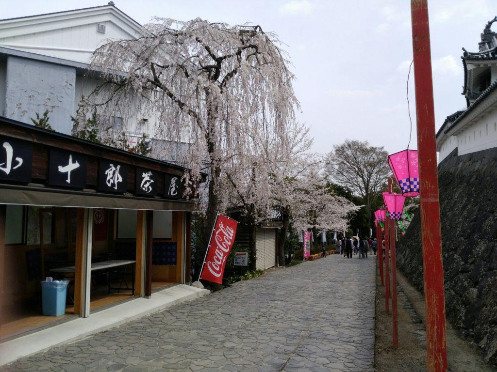 白石城 売店付近のしだれ桜