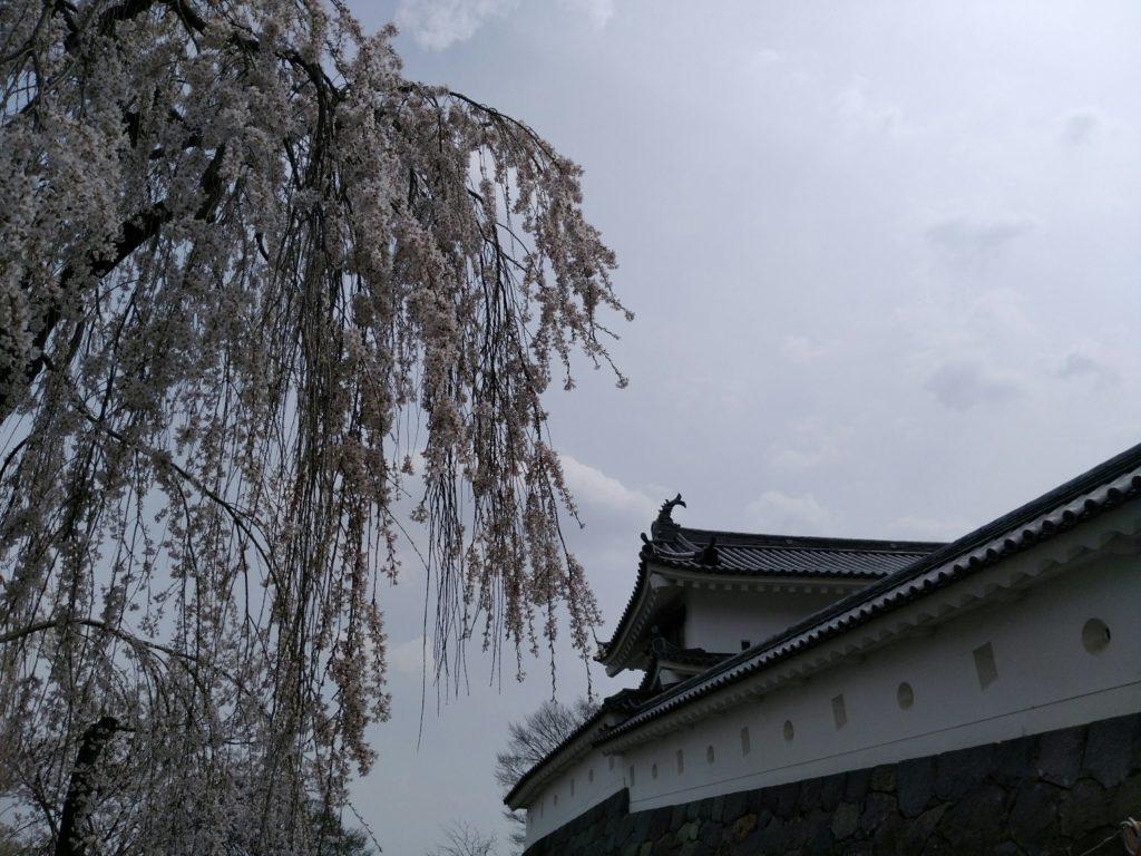 白石城 枝垂桜
