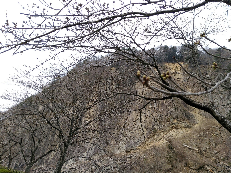 白石市 材木岩公園 桜