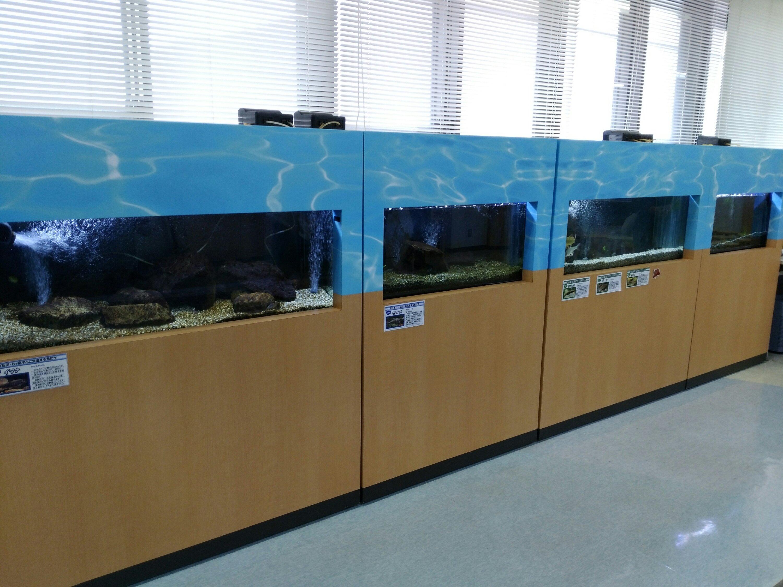 七ヶ宿ダム 管理所 水槽 魚