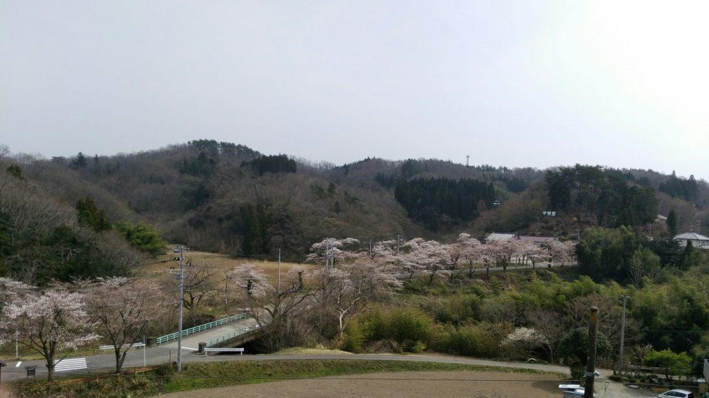 白石市 甲冑堂 桜トンネル