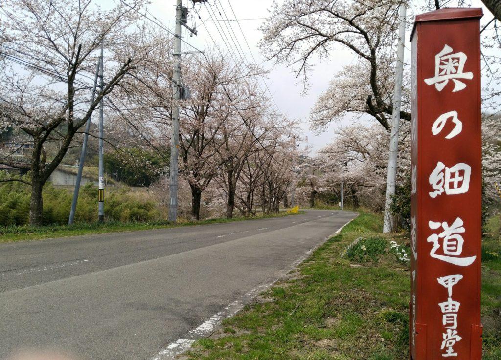 甲冑堂 奥の細道 桜並木