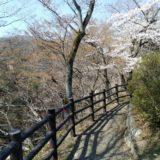 磊々峡 桜