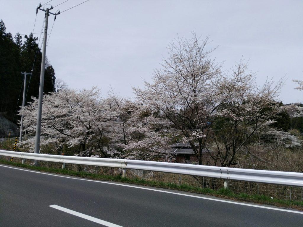 長袋クリーンセンター 桜