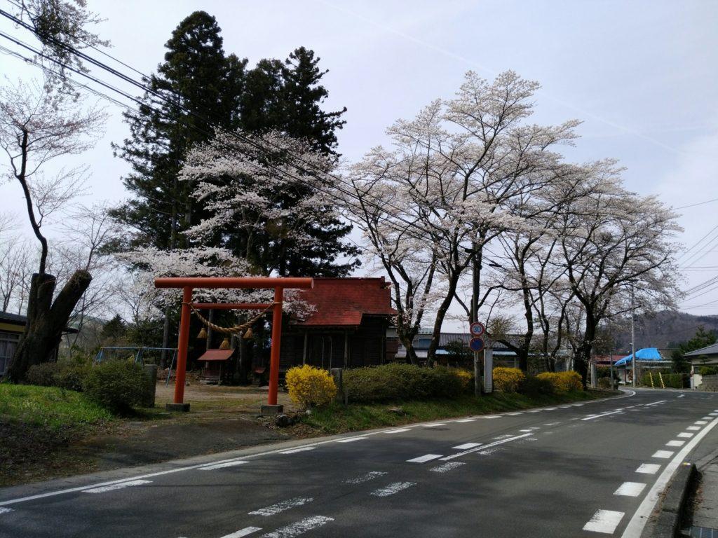 秋保 神明神社 桜