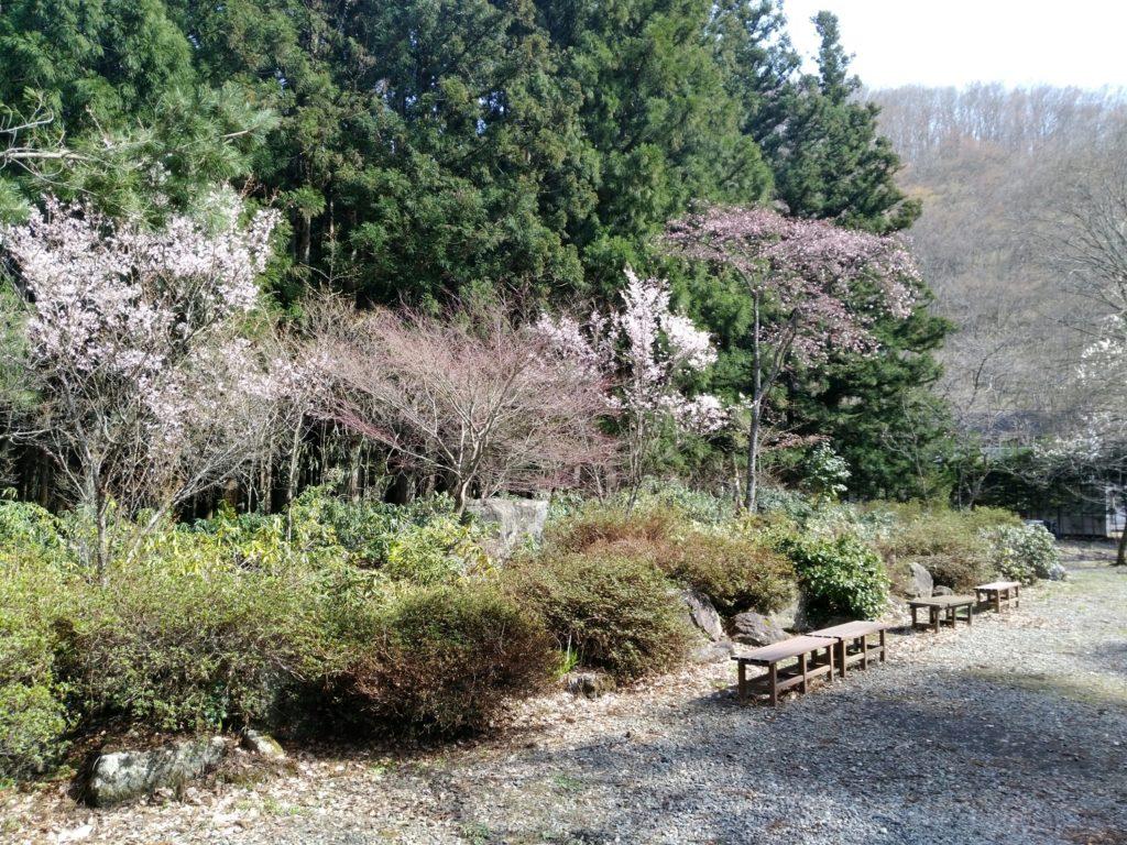秋保大滝不動尊 神社の桜