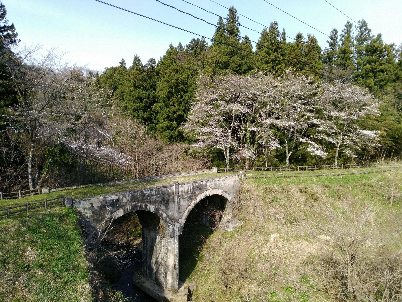 秋保 めがね橋 桜