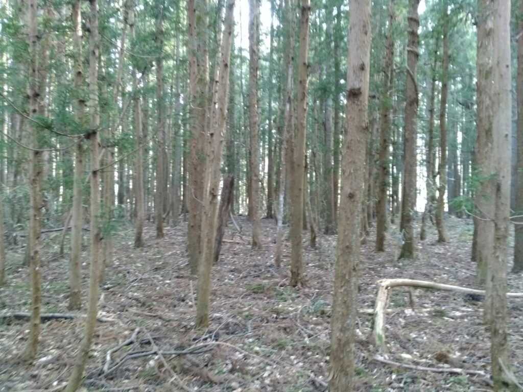仙台市秋保の樹海