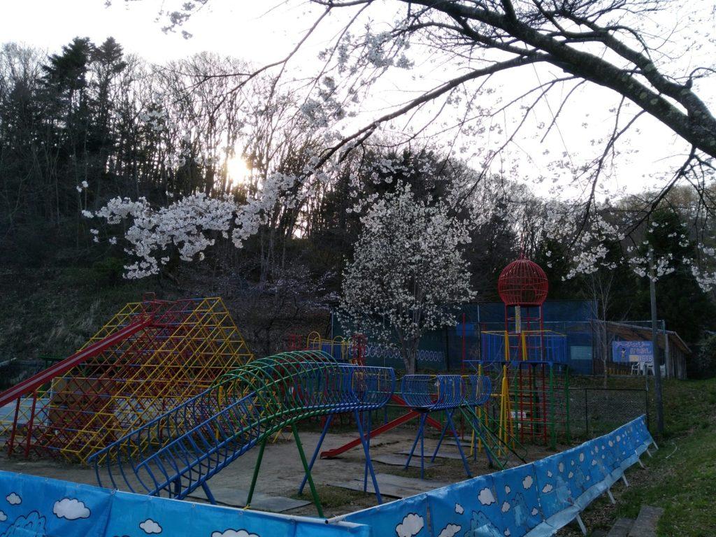 秋保森林スポーツ公園内 桜で花見