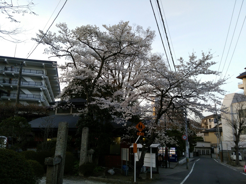 秋保共同浴場 桜