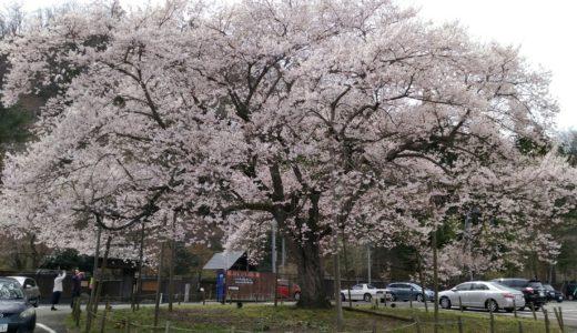 【秋保で花見】桜の名所と穴場まとめ|温泉街やドライブコースのおすすめは?