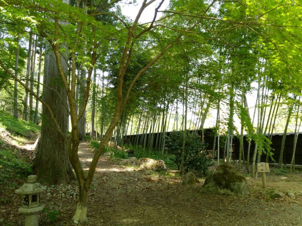 秋保 天守閣自然公園 竹林の景