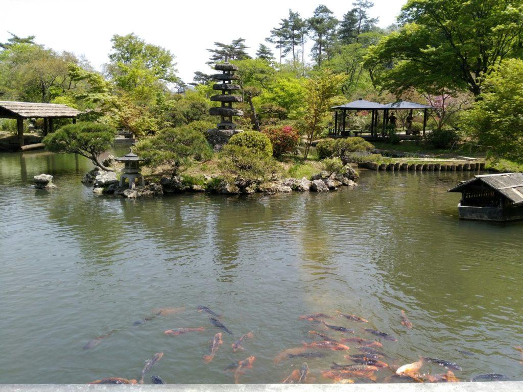 秋保 天守閣自然公園 池の鯉