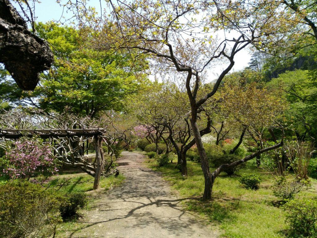秋保 天守閣自然公園 梅林の景