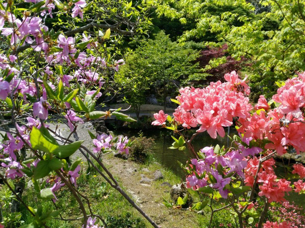 仙台市太白区秋保 天守閣自然公園の花