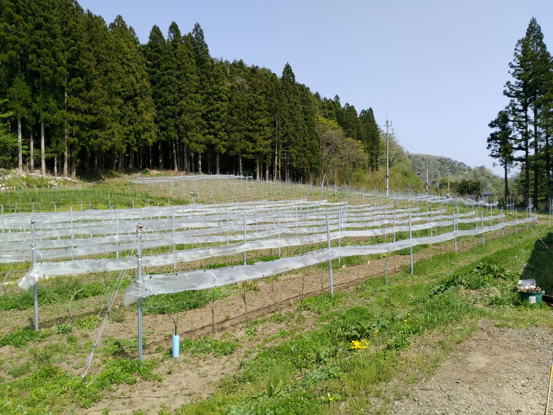 仙台 秋保ワイナリー 農園
