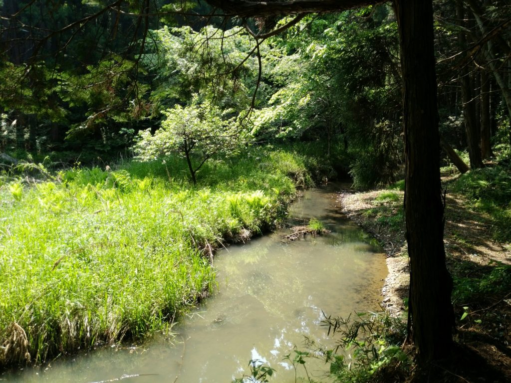 ダムの先の川