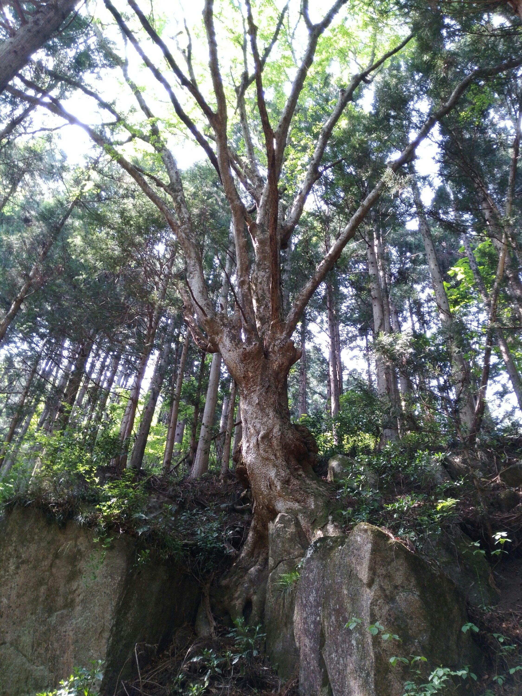 角田市 入の坊 石抱欅