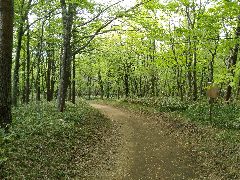 水芭蕉の森の散策路