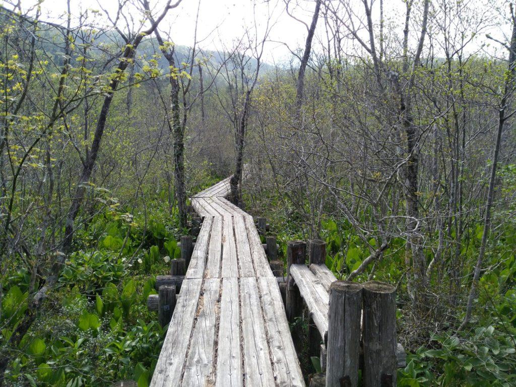 水芭蕉の森 通路