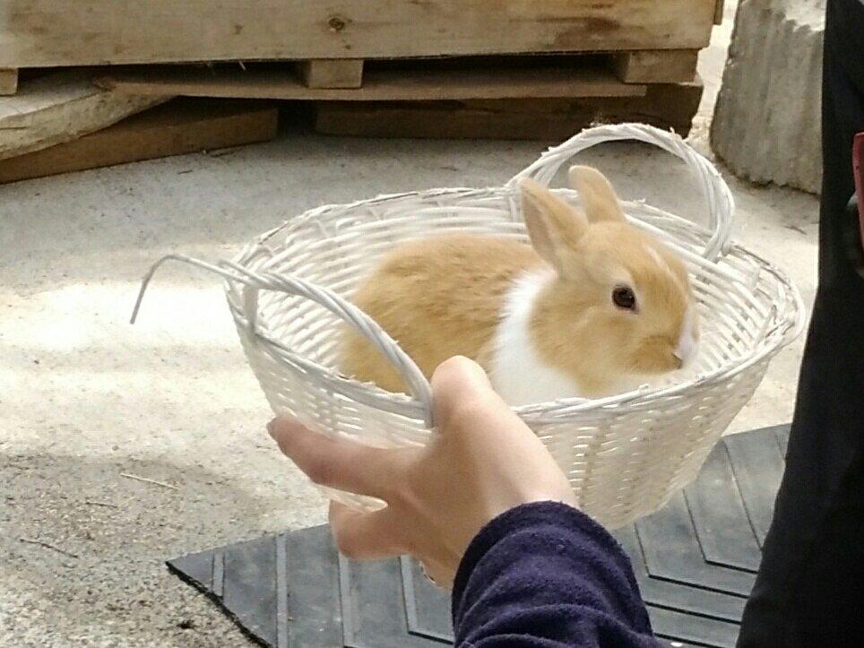 宮城蔵王キツネ村 子ウサギ抱っこ