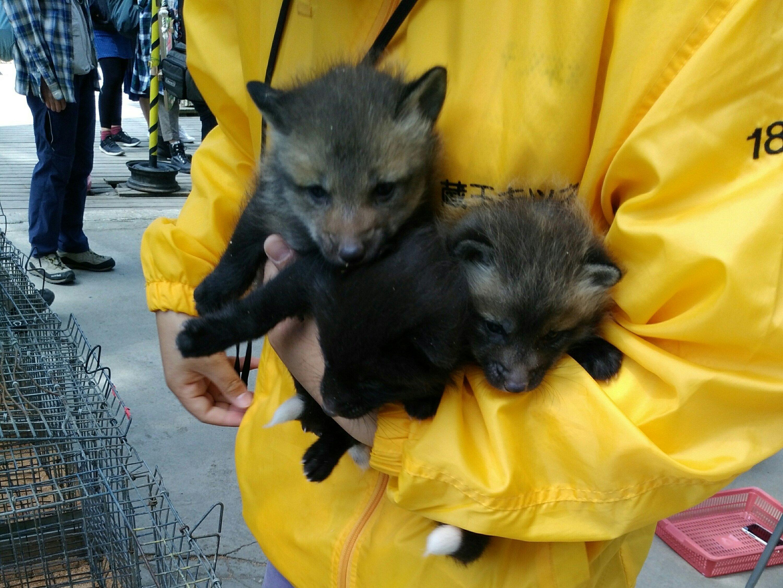 Fox Village in Miyagi Zao Hugging a child fox