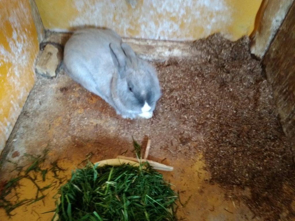 蔵王ハートランド 小動物畜舎 ウサギ