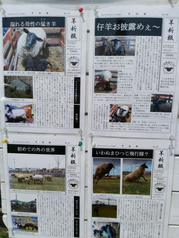 岩沼 ひつじ村 羊新報