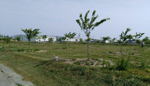 岩沼市|千年希望の丘「二野倉公園」の風景2018年5月