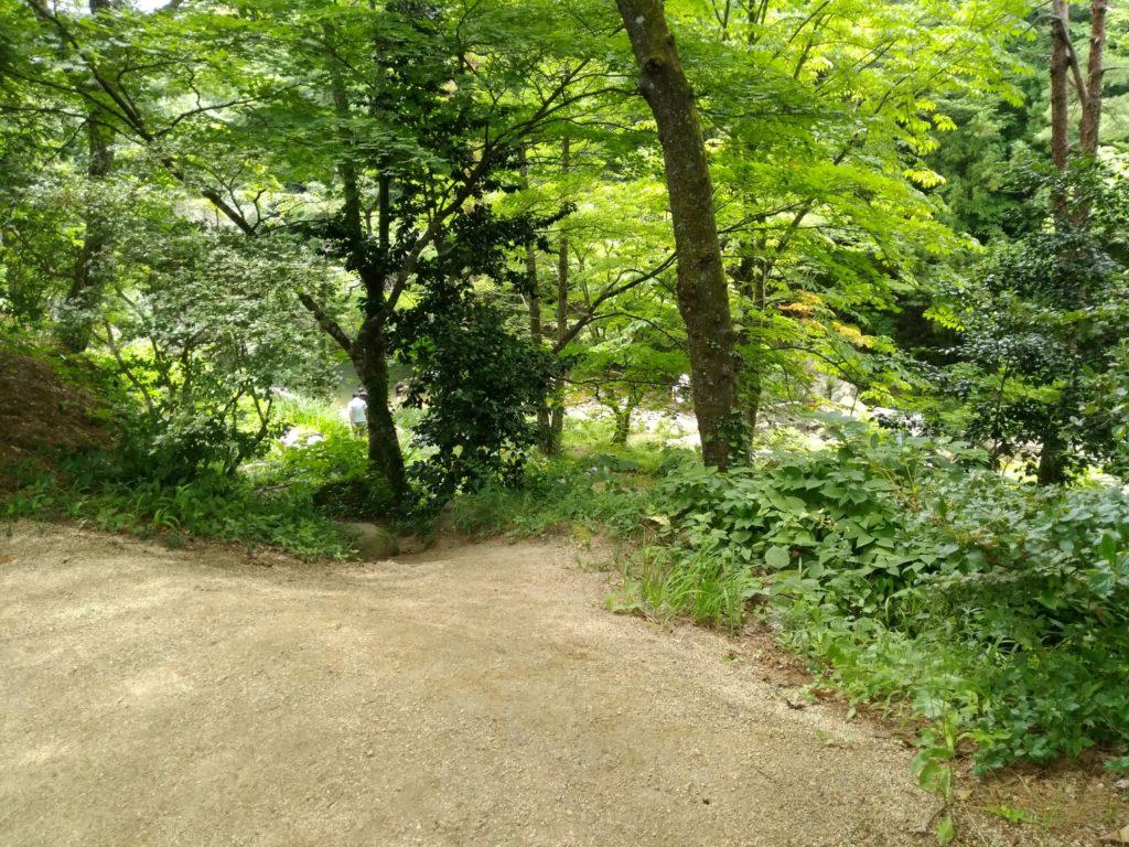 川原へ続く道