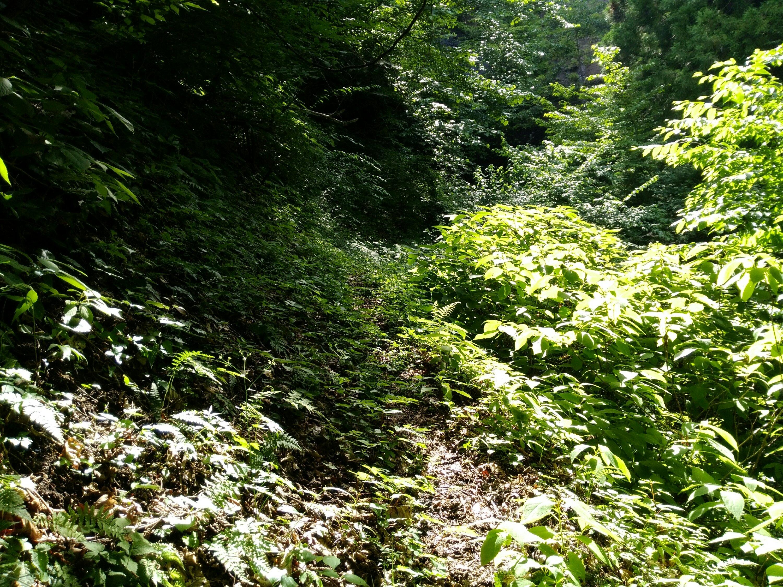 地蔵滝への険しい道のり