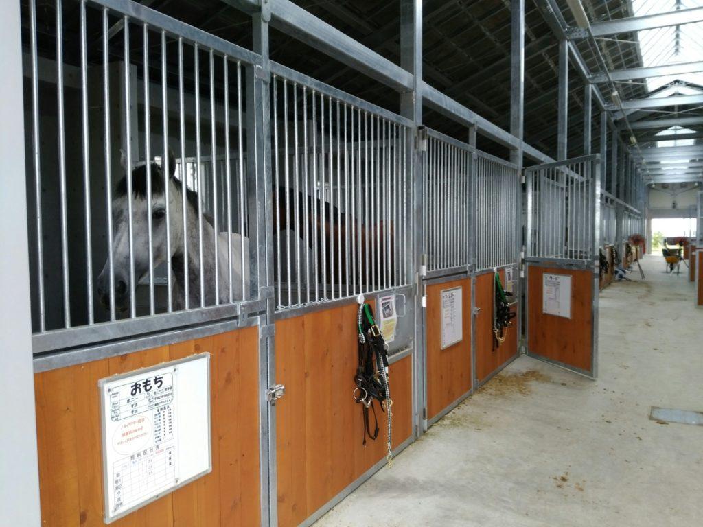 本厩舎の馬たち