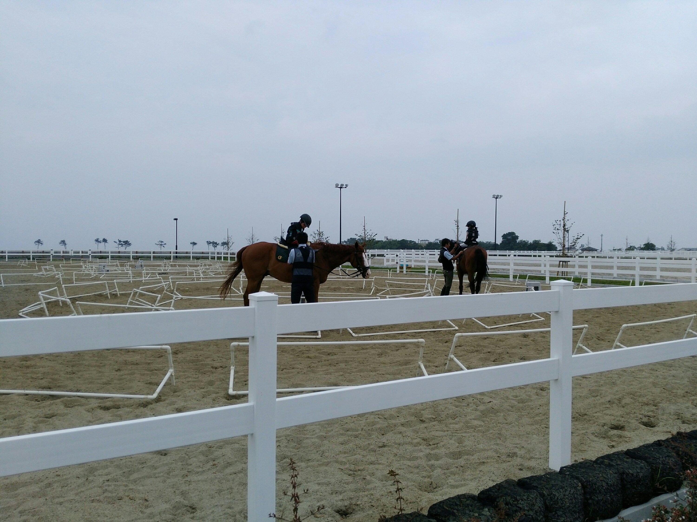 海岸公園で乗馬体験