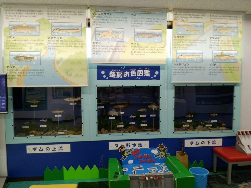 釜房湖のお魚図鑑