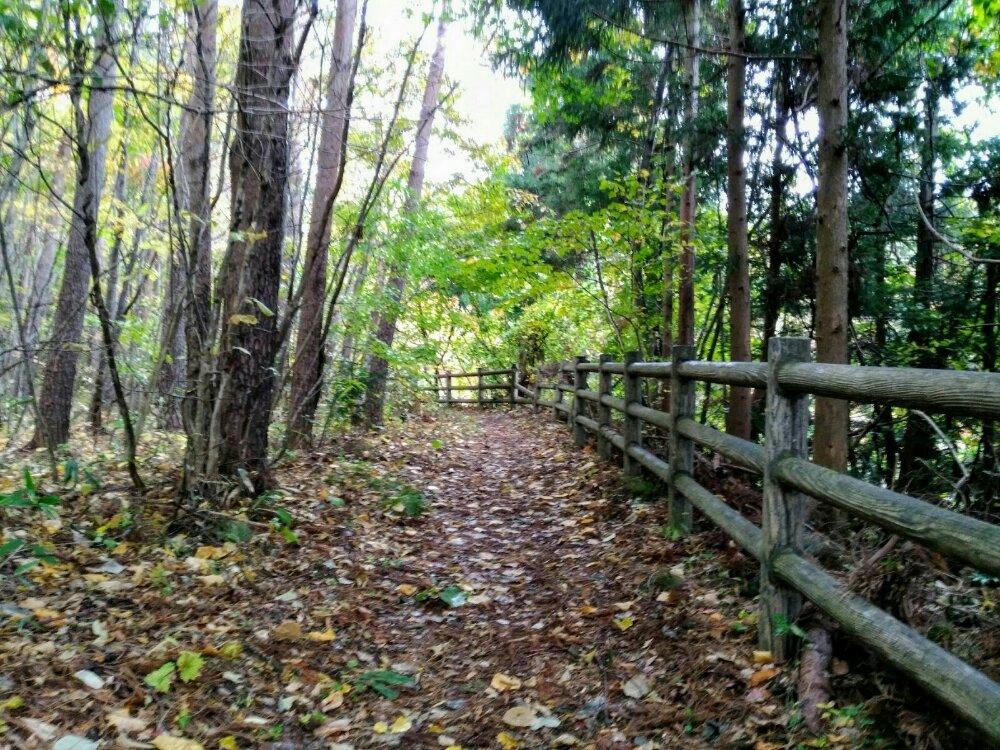 長老湖~やまびこ吊り橋の遊歩道