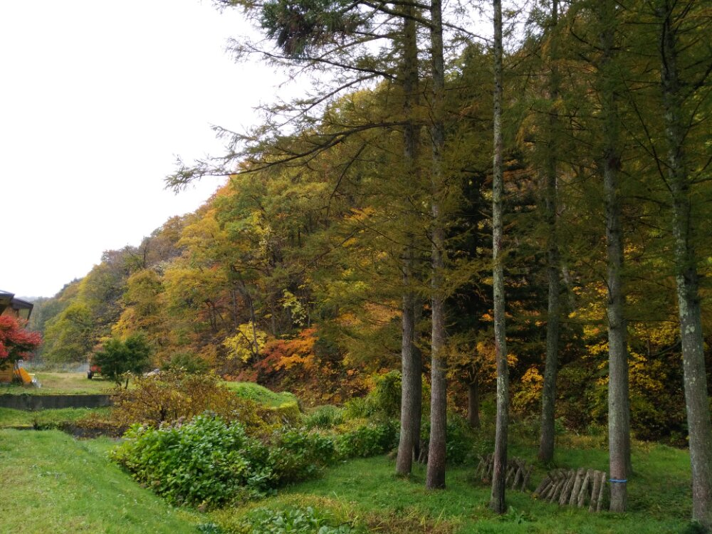 芭蕉庵の紅葉