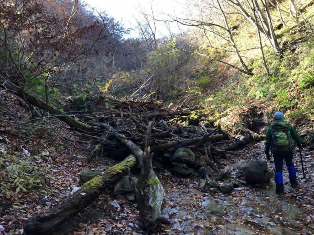 オボコンベ山の流木で塞がれた道