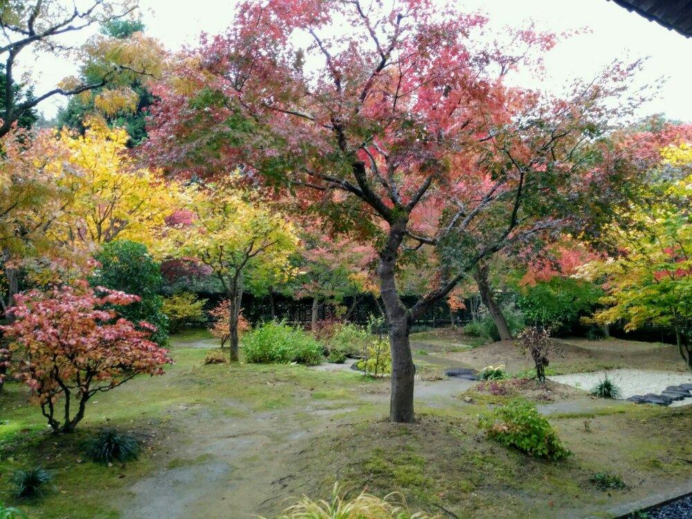 慈眼寺の紅葉